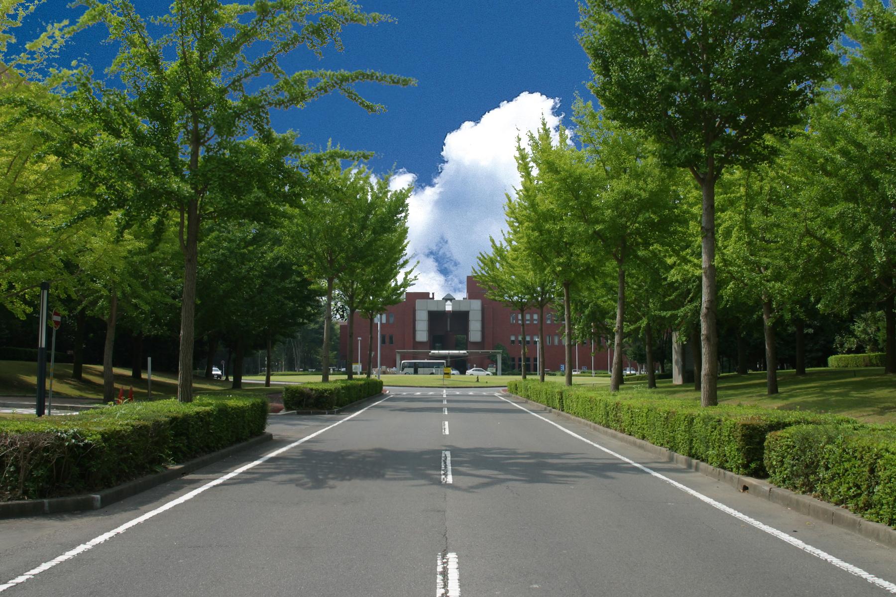 つくばセンターの中央地区はイチョウ並木が出迎えてくれます。秋は綺麗に色づきますよ。